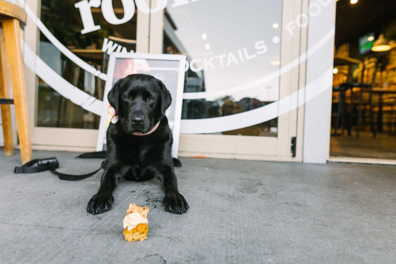 dog with pupcake