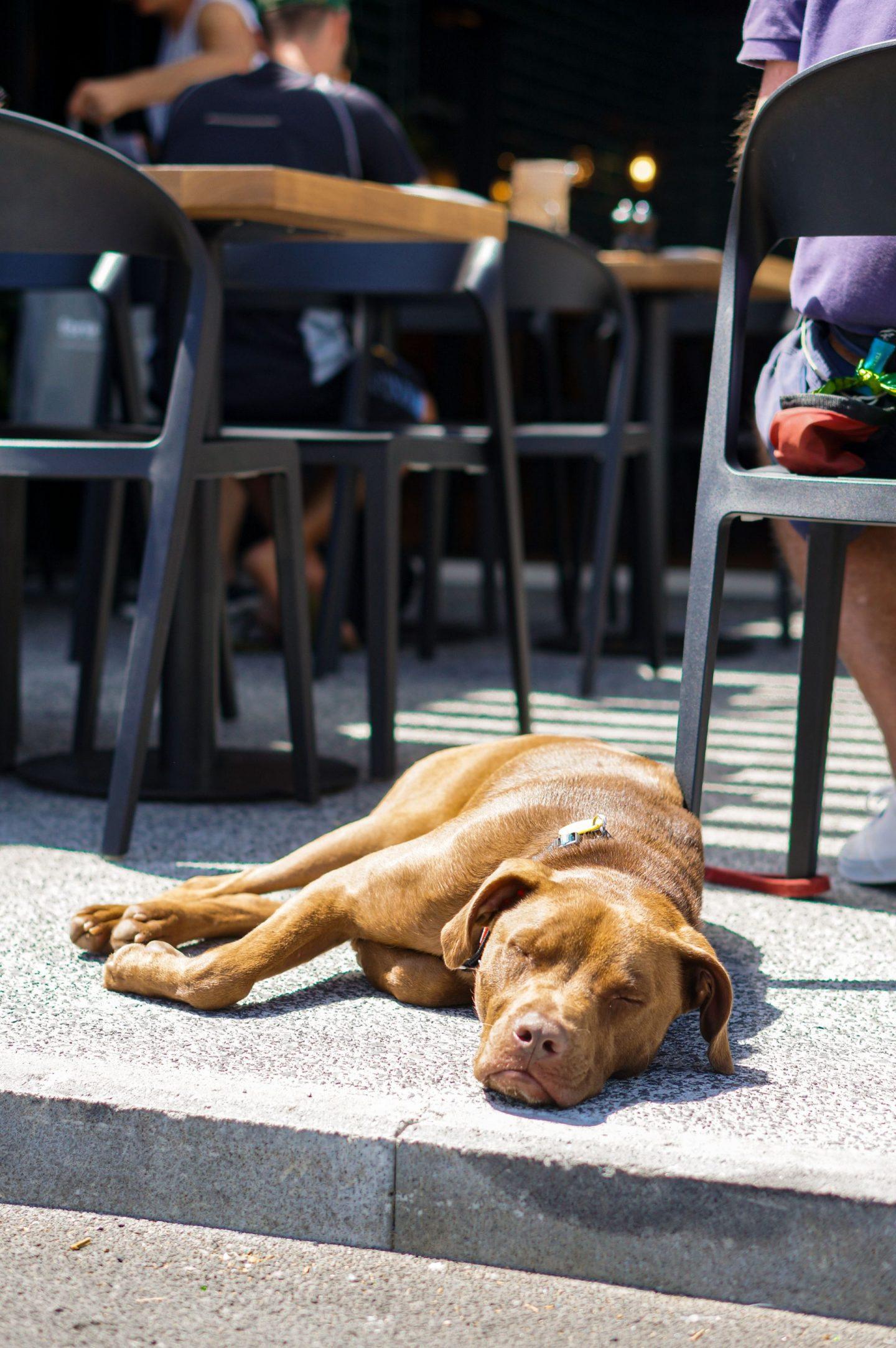 dog sleeping on ground at cafe