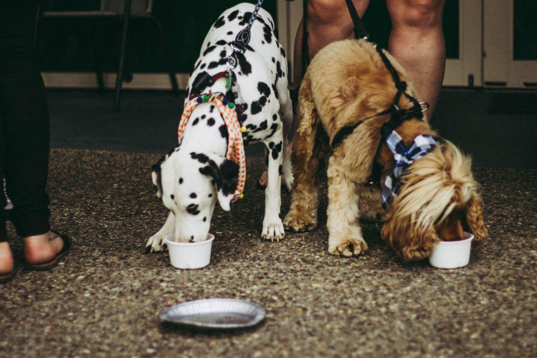 dogs drinking pupacinos