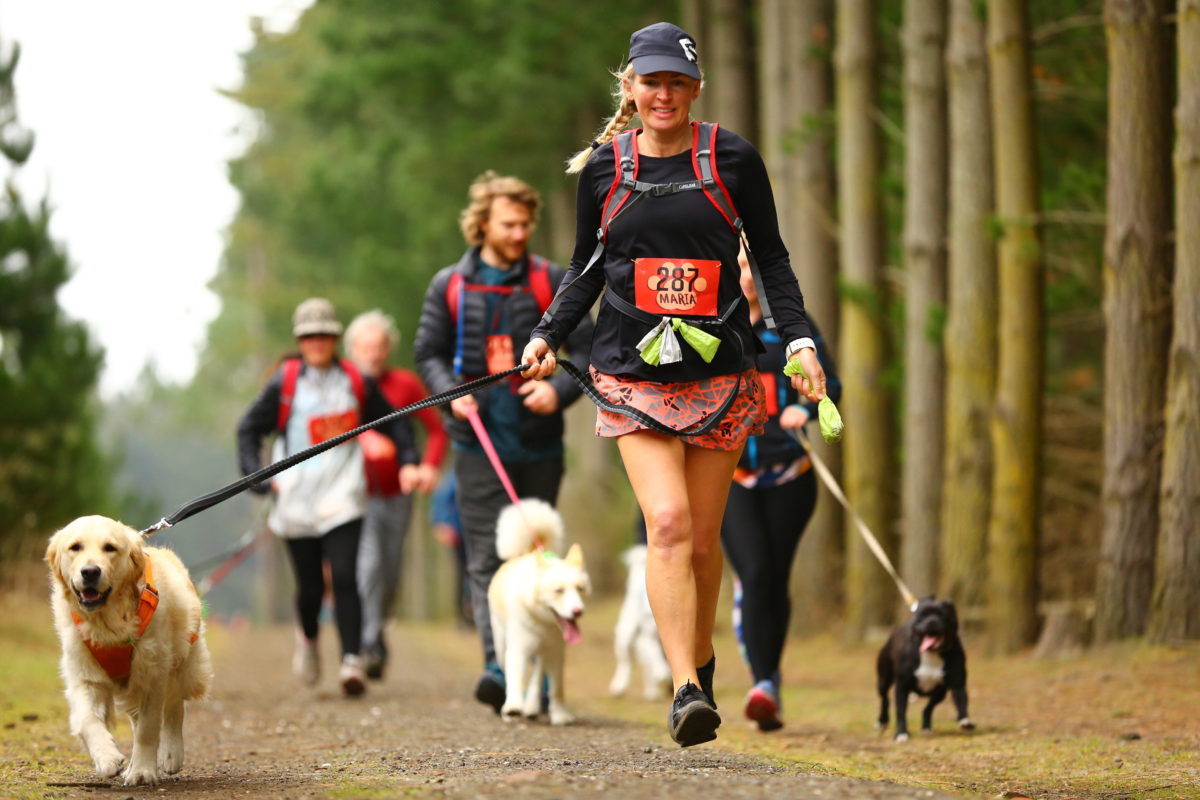 dogs running in marathon with owner