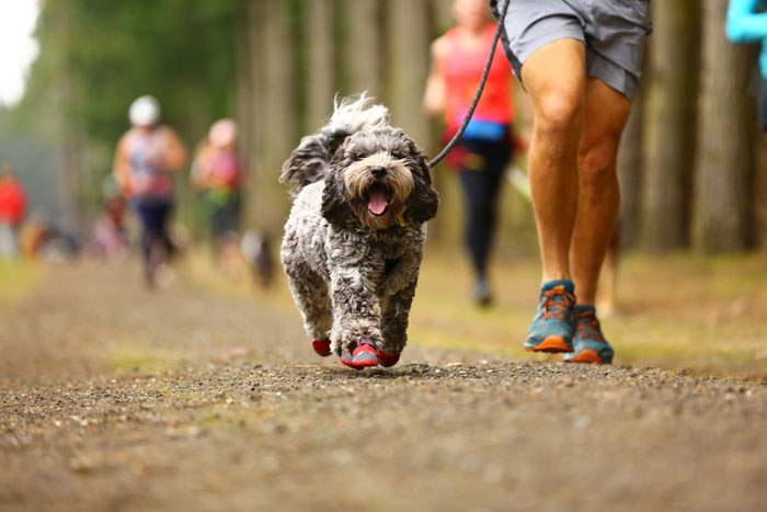 dog running with shoes on