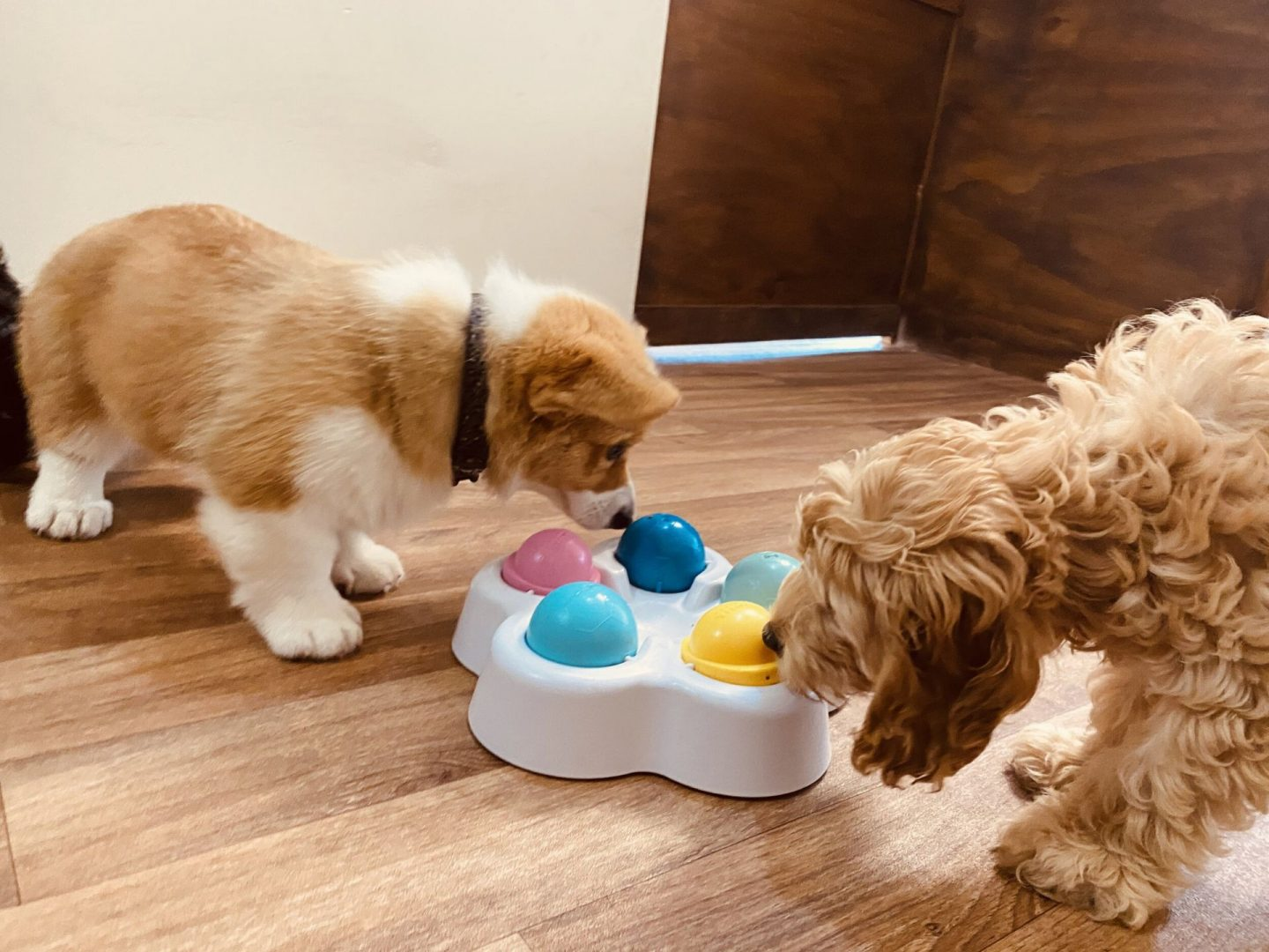 PUPPIES AT DAYCARE