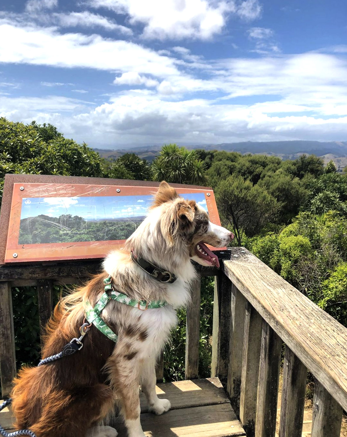 dog sitting on deck at top of hill looking out to view