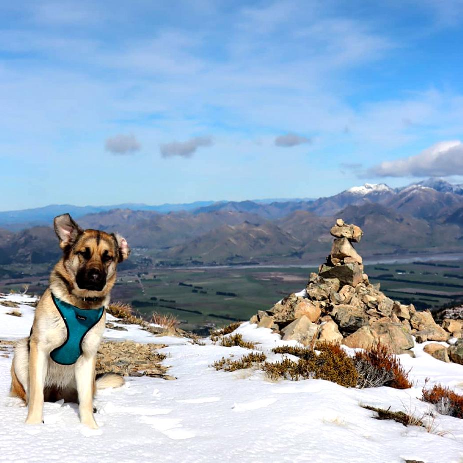 dog on snow mountain