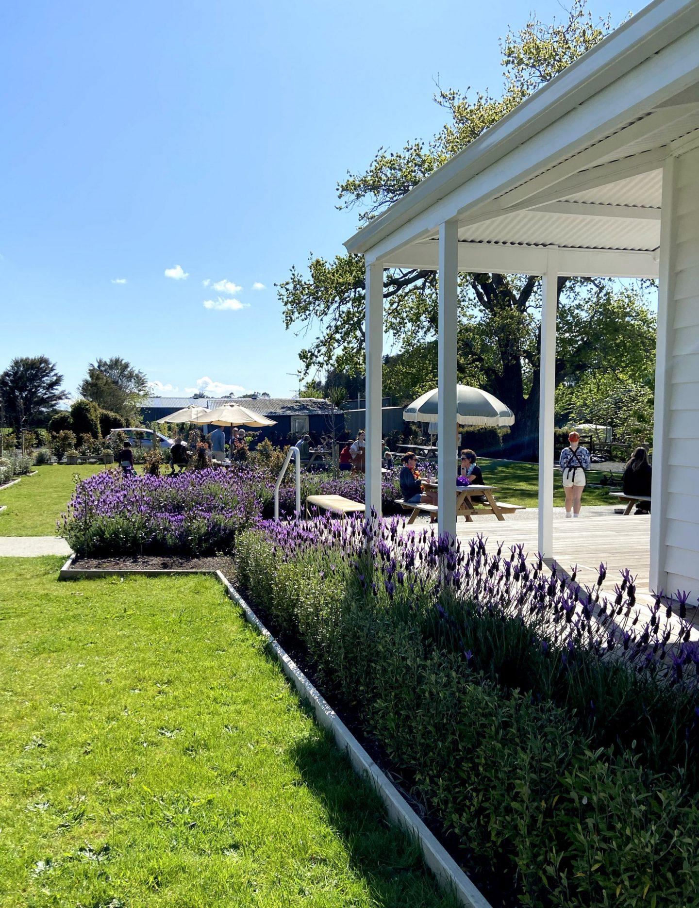 lavender flowers around white villa